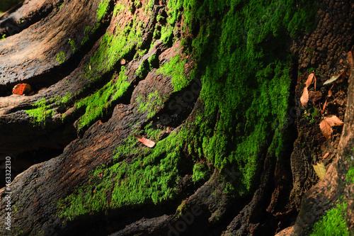 Canvastavla tree bark texture