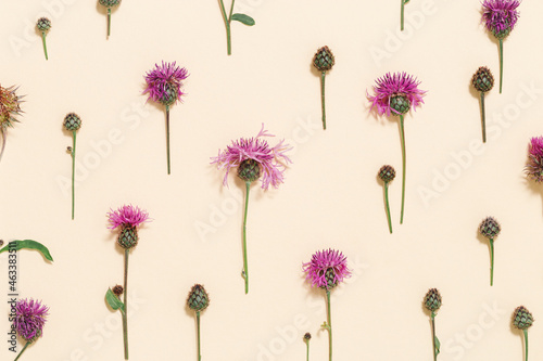 Canvastavla Top view meadow flowers thorn thistle or burdock on pale pink color background