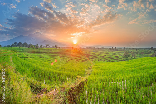 Fototapeta Morning view of sunrise over beautiful green rice fields with blue mountains