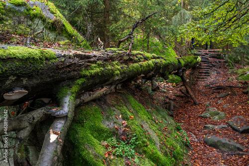 Fallen tree Fotobehang