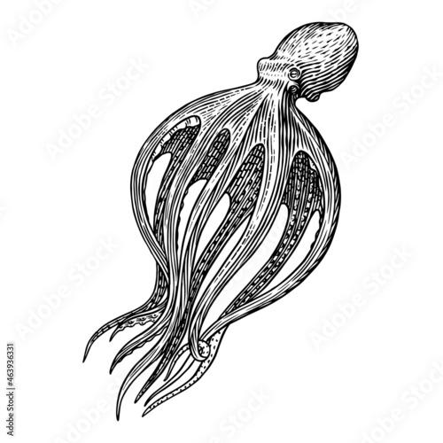 Sea octopus Fotobehang
