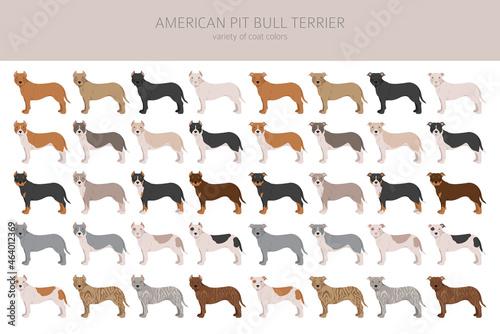 Fotografiet American pit bull terrier dogs clipart