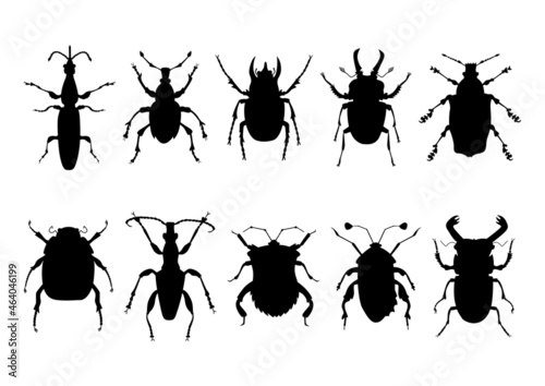 Foto Hand-drawn silhouettes of various beetles, bugs and insects, vector isolated collection
