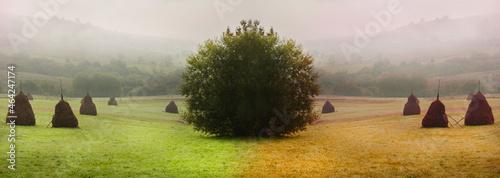 Fotografie, Obraz Foggy autumn landscape transition from summer to autumn