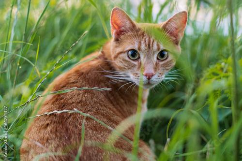 Rudy kot na łonie natury